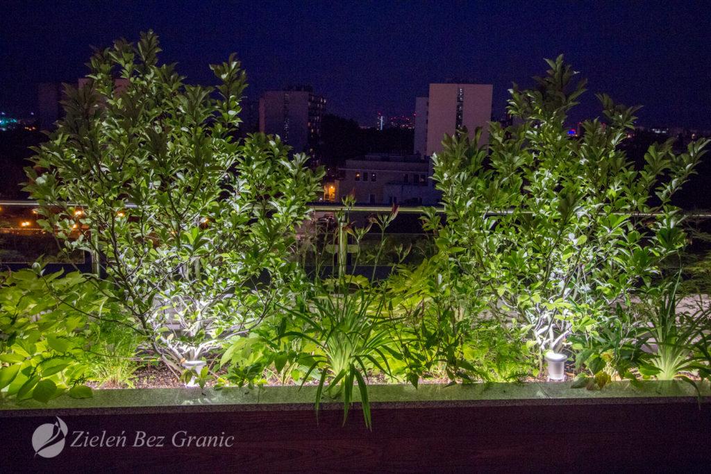 Kameralne oświetlenie roślinności.